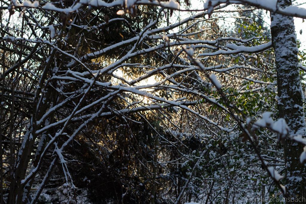 Sun behind snowy trees