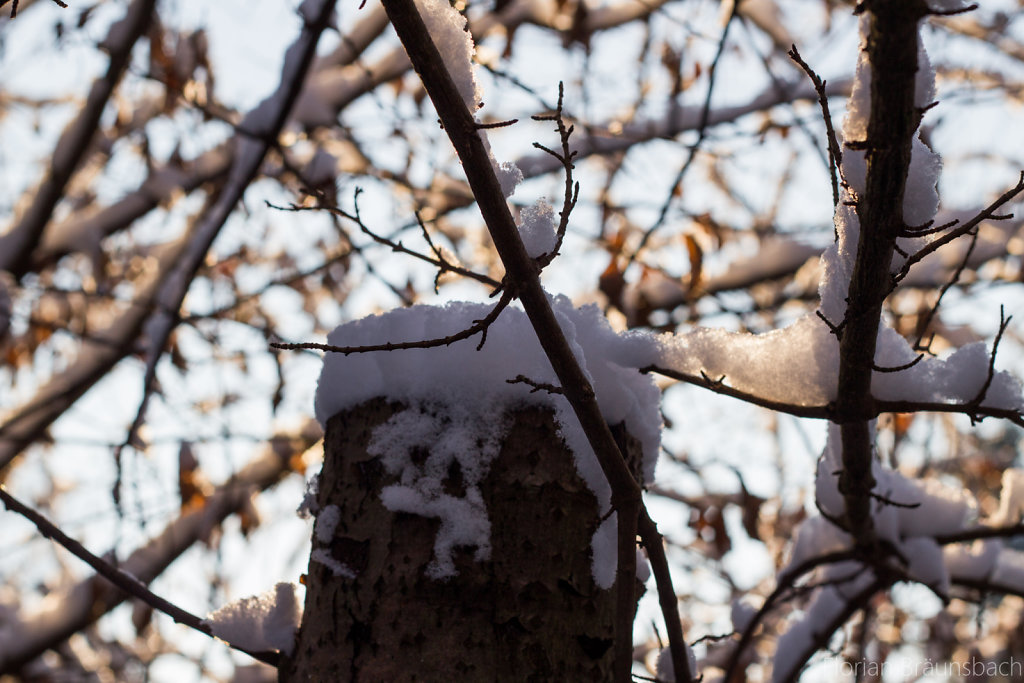 Snowed Tree Stump